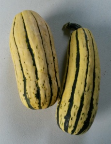 Delicata squas