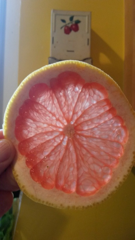 Grapefruit slice.jpg